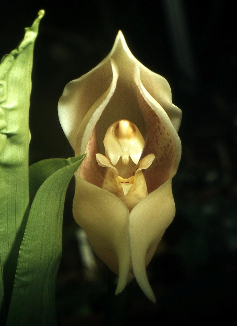 ma nouvelle fleur Angulo12
