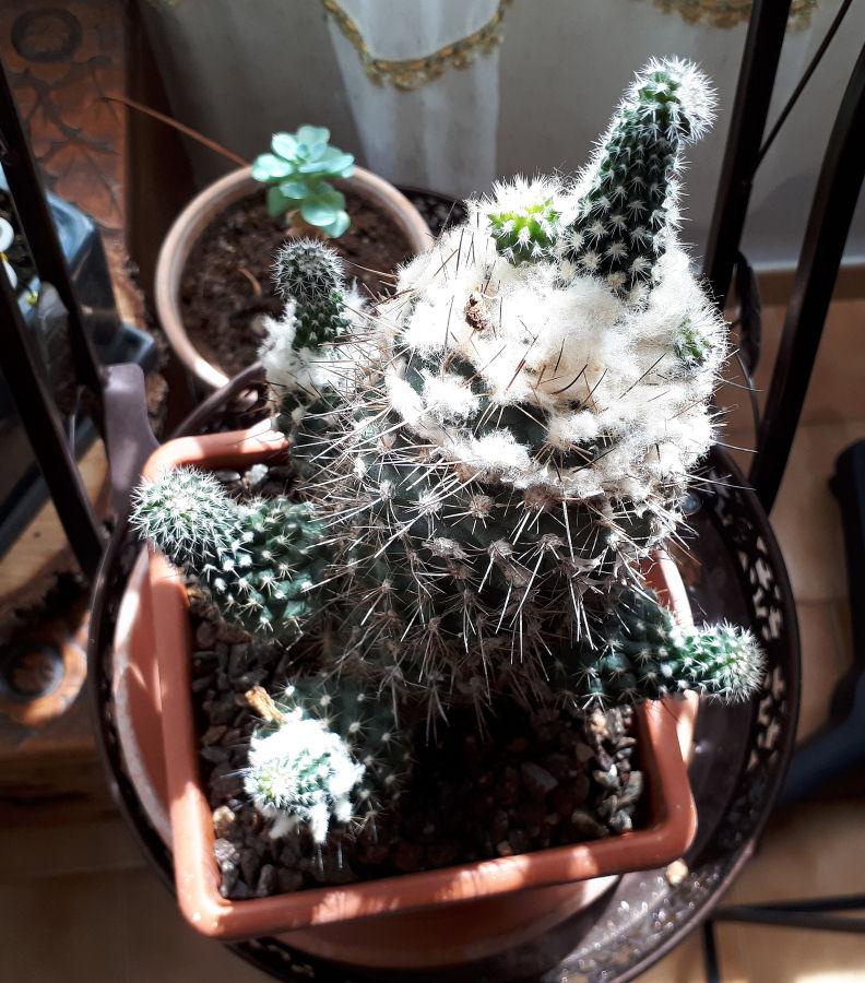 Cactus  Cactus12