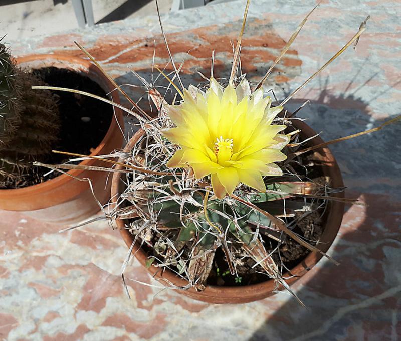 Cactus  Cactus17