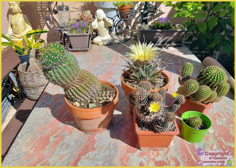plante Grasse .... - Page 3 Cactus20