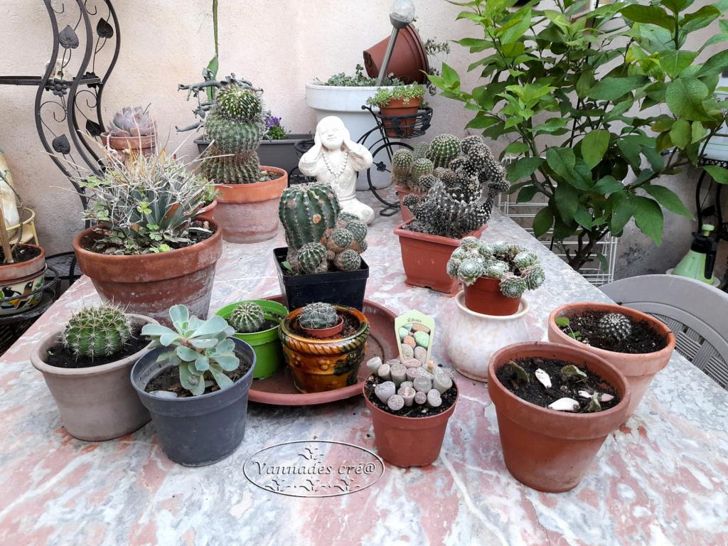 plante Grasse .... - Page 3 Cactus21