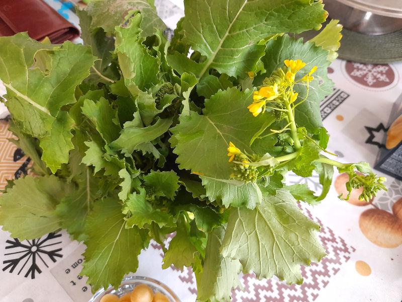 Vous connaissez ce légume ? Cima di Rapa ... Choux_10