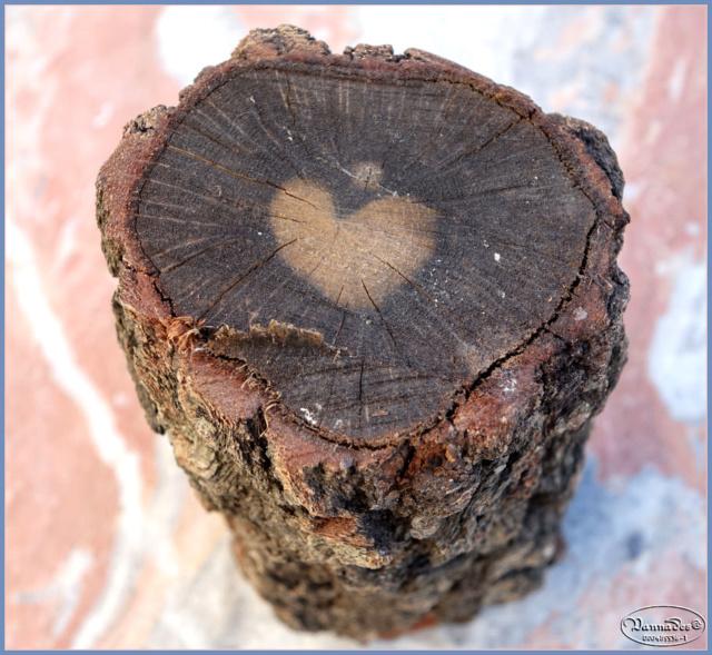 """Curiosités de la Nature """"J'adore """" Coeur_10"""