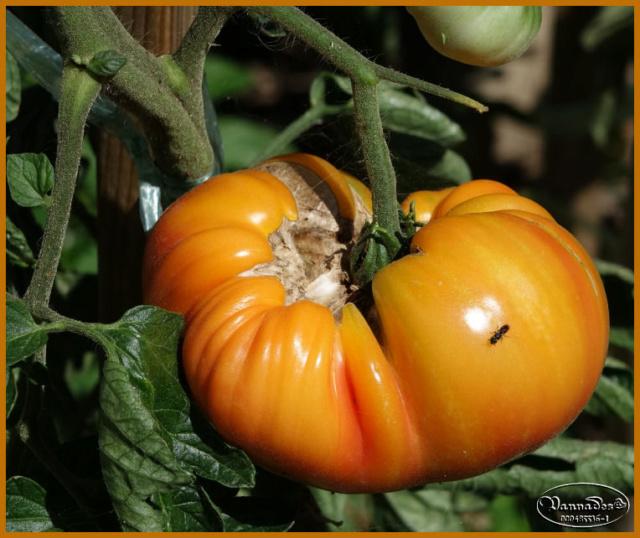 Légumes et fruits  du Jardin Dsc00011