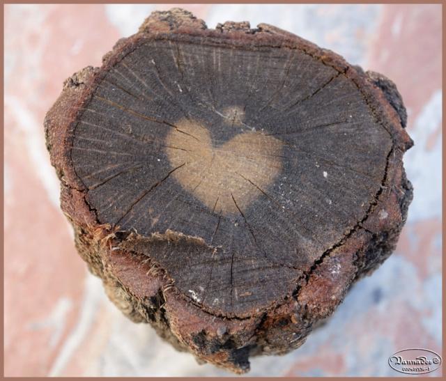 "Curiosités de la Nature ""J'adore "" Dsc00310"