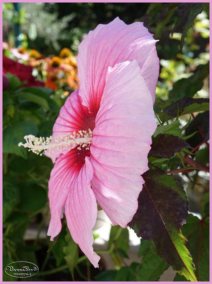 Fleurs du Jardin Dsc00311