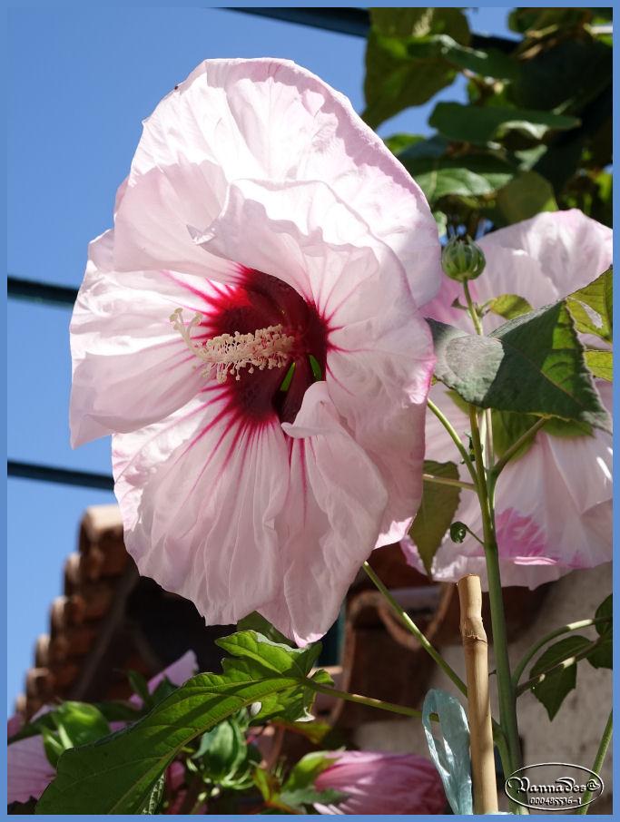 Fleurs du Jardin Dsc00312