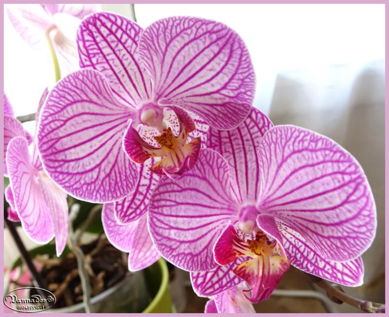 Fleurs du Jardin Dsc00410
