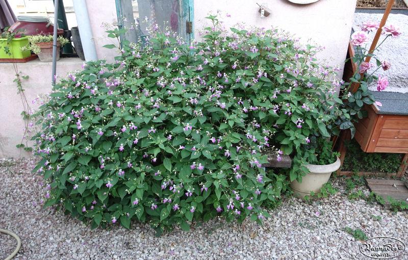 Fleurs du Jardin Dsc00715