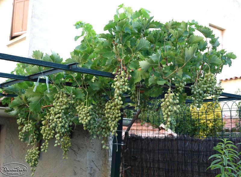 Légumes et fruits  du Jardin Dsc00719