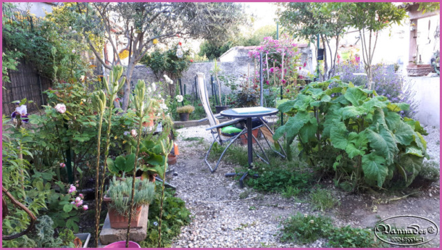 Mes fleurs de mon petit Jardin  - Page 2 Jardin10