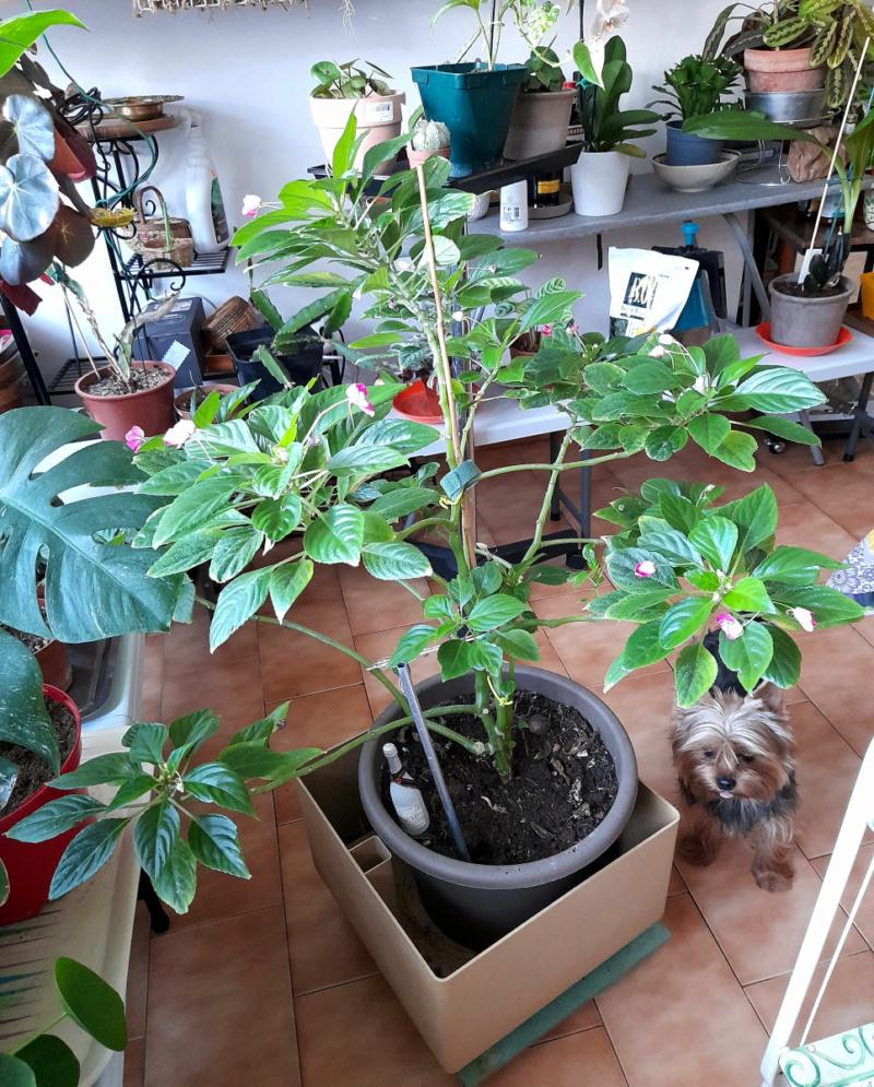 Ma Salle de séjour transformée pour les plantes en Vérandas pff !!! - Page 3 Marie_11