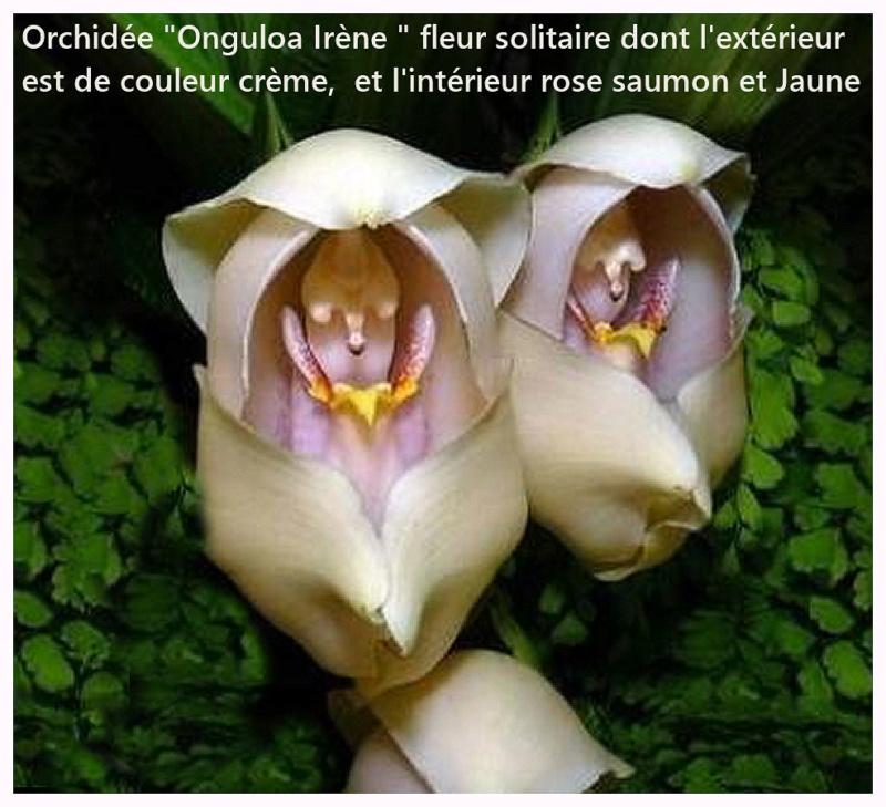 Mon Orchidée  Orchid10