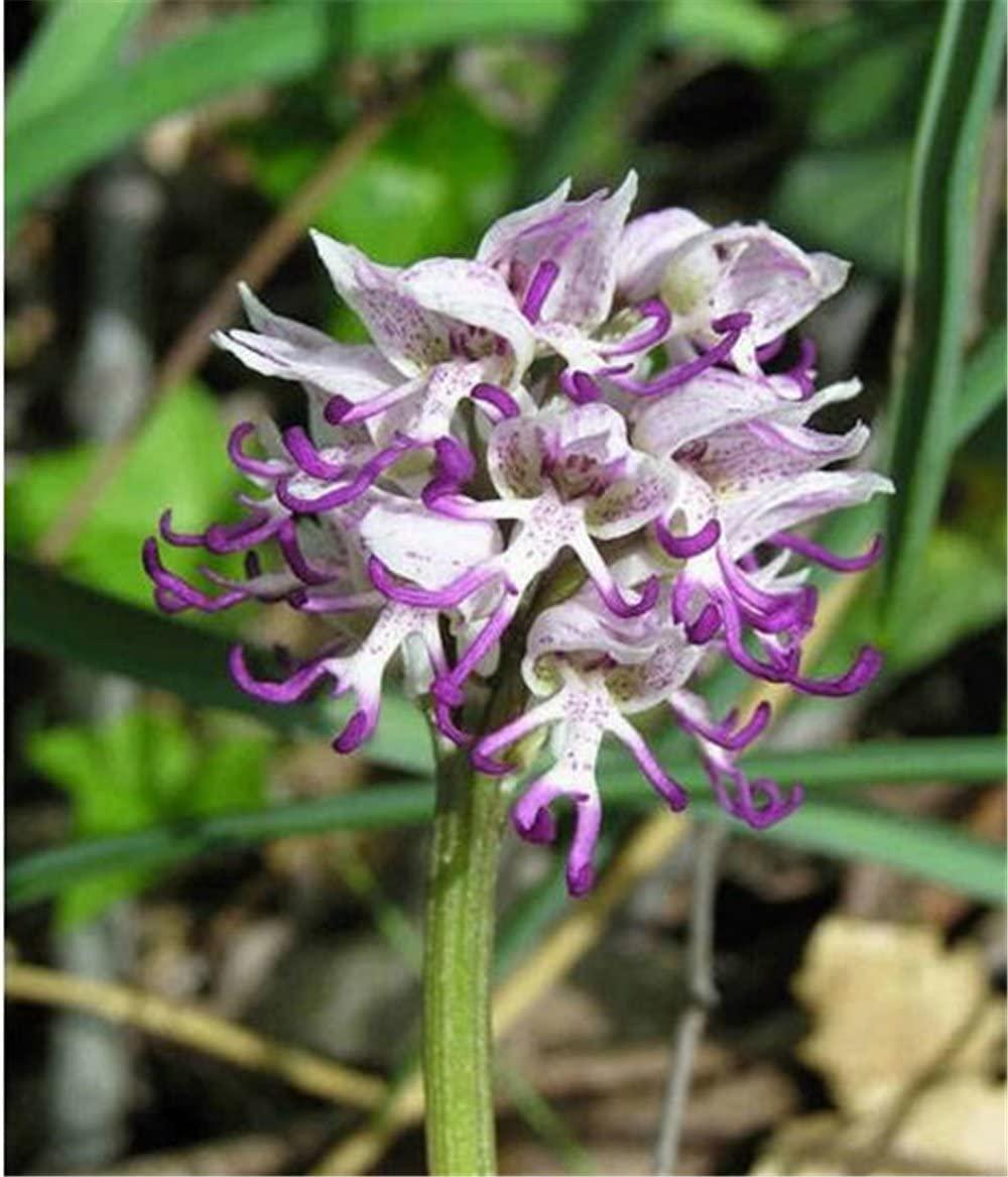 Mon Orchidée  Orchid13