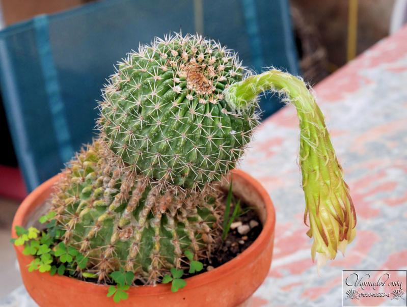 plante Grasse .... - Page 2 P1030411