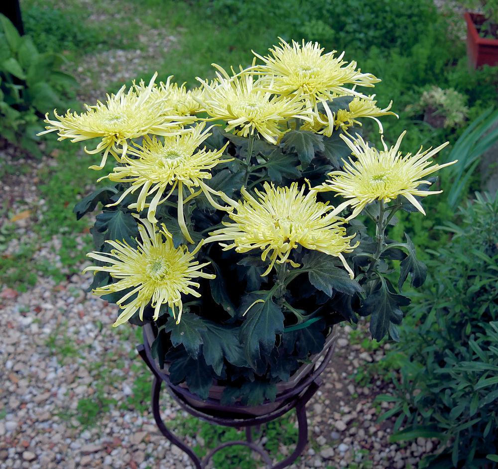 Dernieres fleurs, légumes, etc ... P1050512