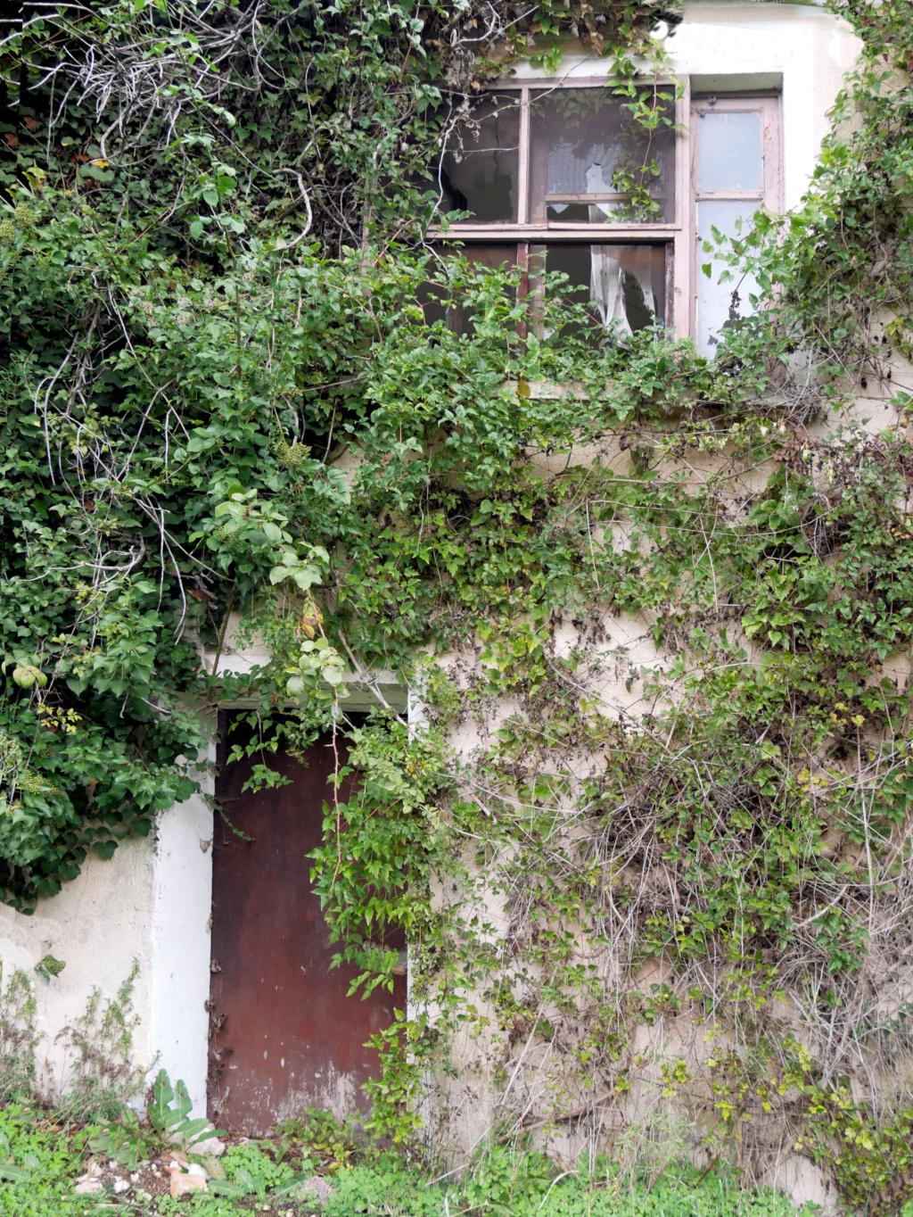 La Maison abandonnée  P1050712