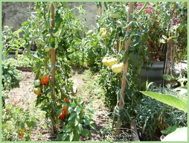 Fruits et Légumes de mon Jardin  P1060716