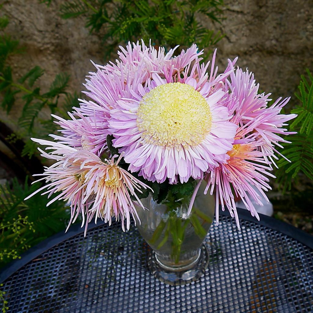 Bouquet P1060911