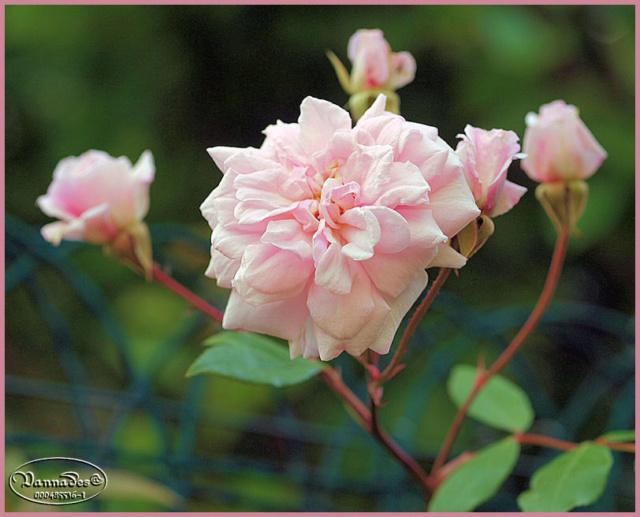 Mes fleurs de mon petit Jardin  P5111510