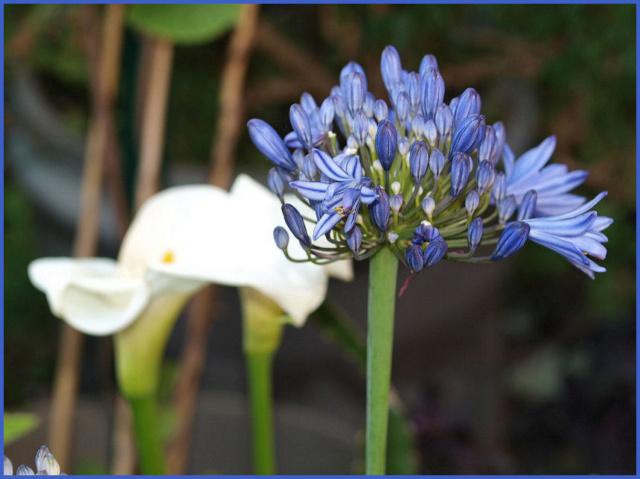 Mes fleurs de mon petit Jardin  - Page 6 P6221613