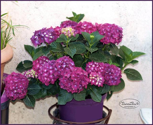 Mes fleurs de mon petit Jardin  - Page 6 P6221711