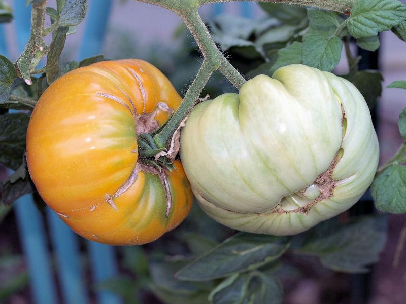 Légumes et fruits  du Jardin P8101722