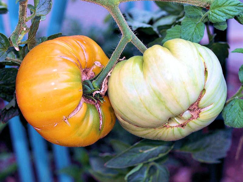 Légumes et fruits  du Jardin P8101725