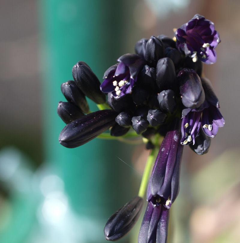 Mes fleurs de mon petit Jardin  - Page 12 P8111714