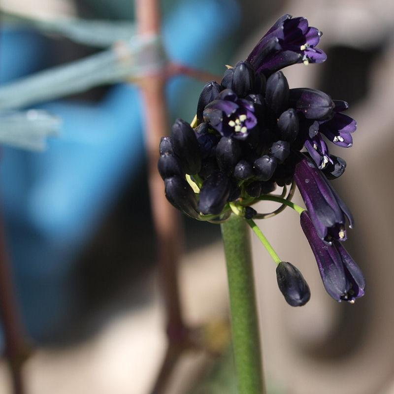 Mes fleurs de mon petit Jardin  - Page 12 P8111715