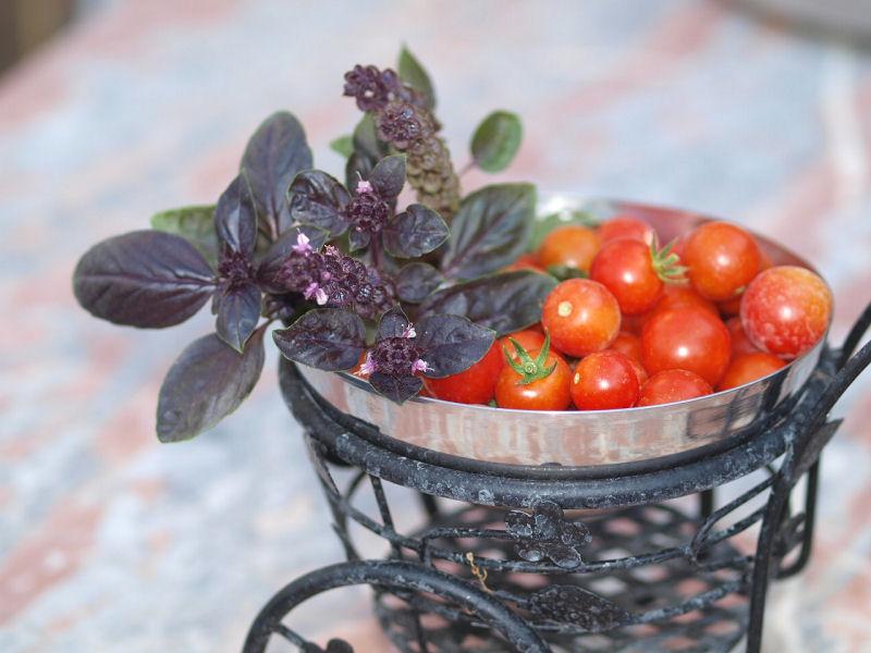 Légumes et fruits  du Jardin - Page 2 P8152010