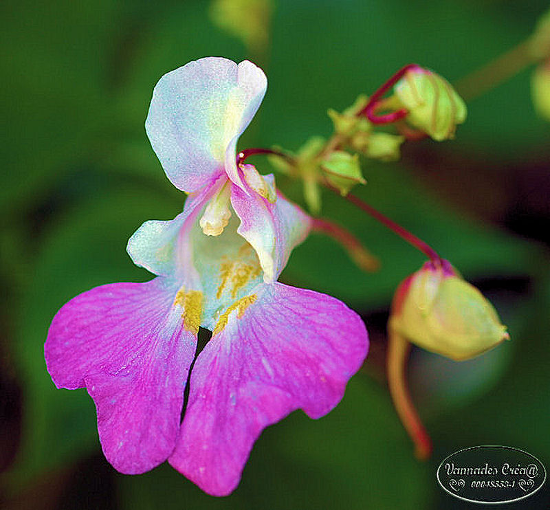 Fleurs du Jardin P9015110