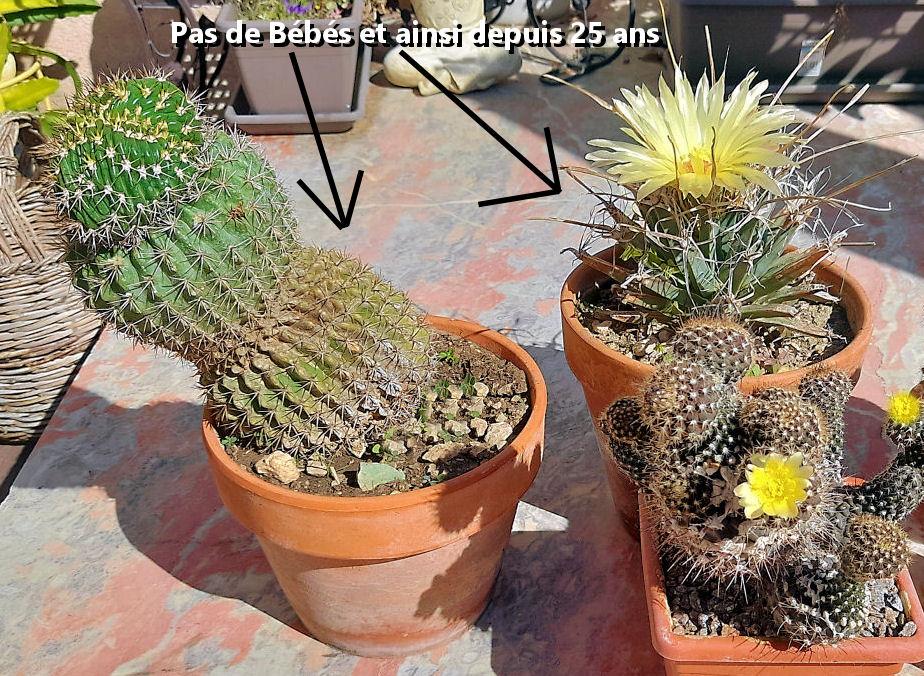 plante Grasse .... - Page 3 Pas_de13