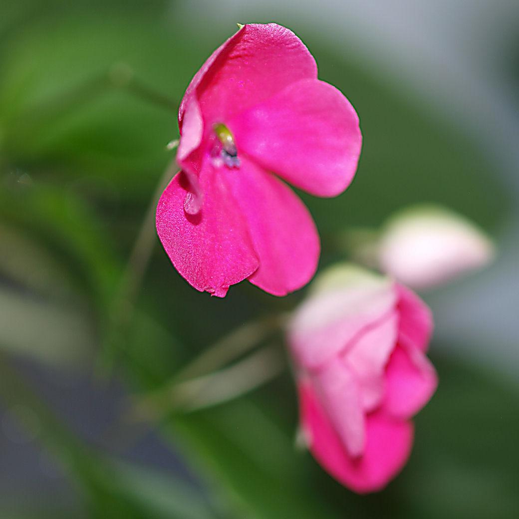Des fleurs et plantes  Pc249610