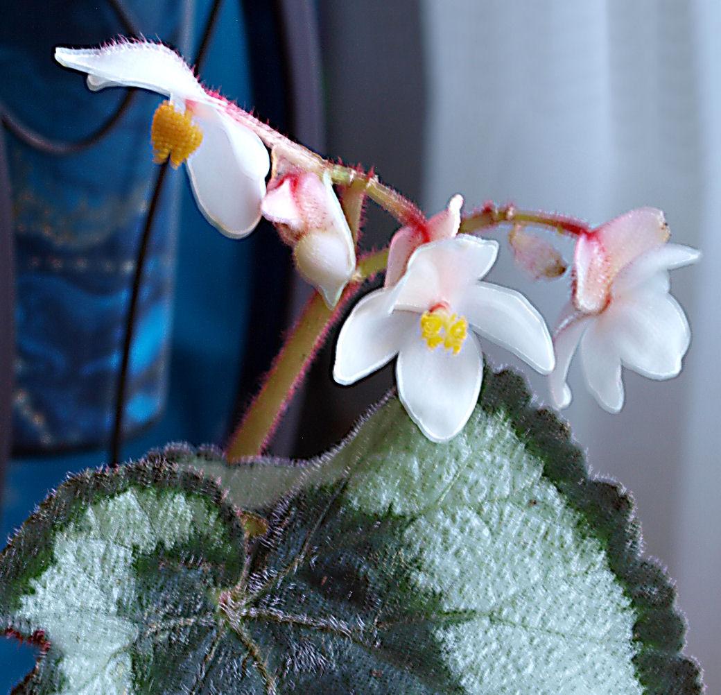 Des fleurs et plantes  Pc249612