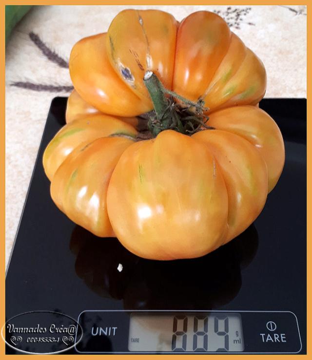 Les tomates que je cultive dans mon petit Jardin *** Tomate12