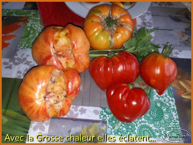 """le travail de la Grosse chaleur """"ça éclate"""" Tomate13"""