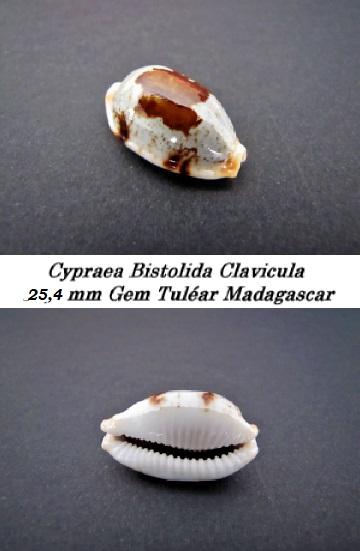 Bistolida_stolida_clavicola_Lorenz, 1998 Cyprae28