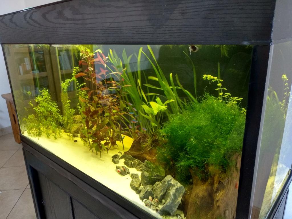 Aquarium 360l type amazonien (renouvellement de la population) Img_2011