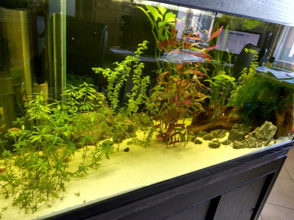 Aquarium 360l type amazonien Img_2012