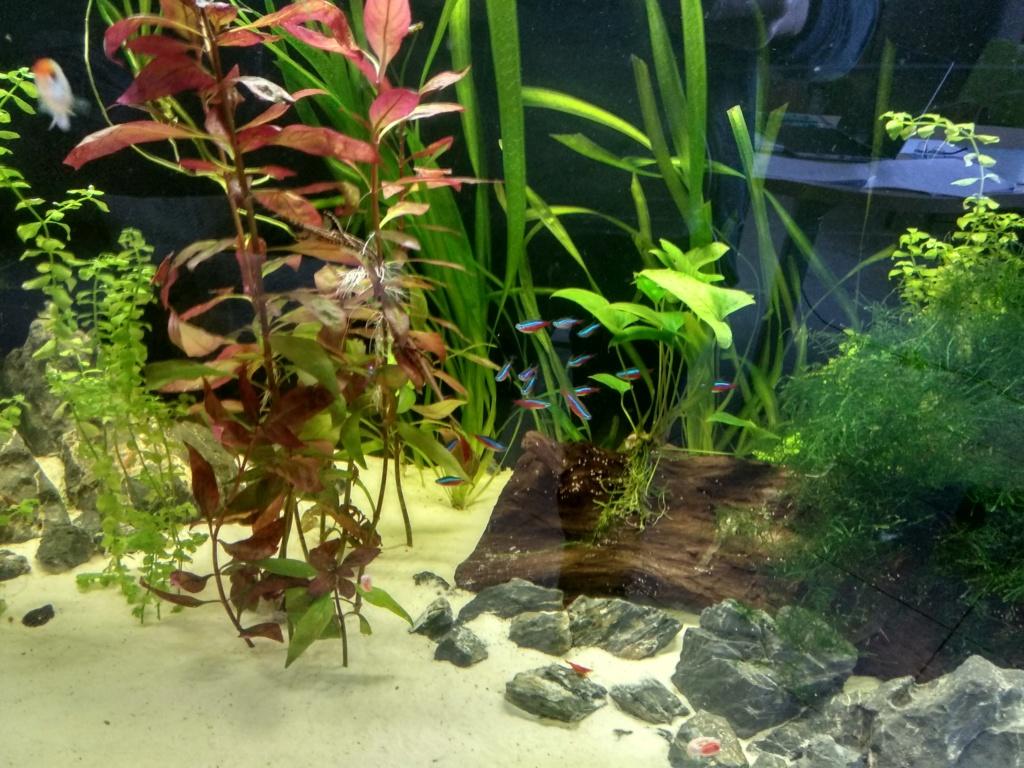 Aquarium 360l type amazonien (renouvellement de la population) Img_2015