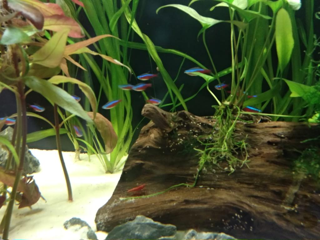 Aquarium 360l type amazonien Img_2022