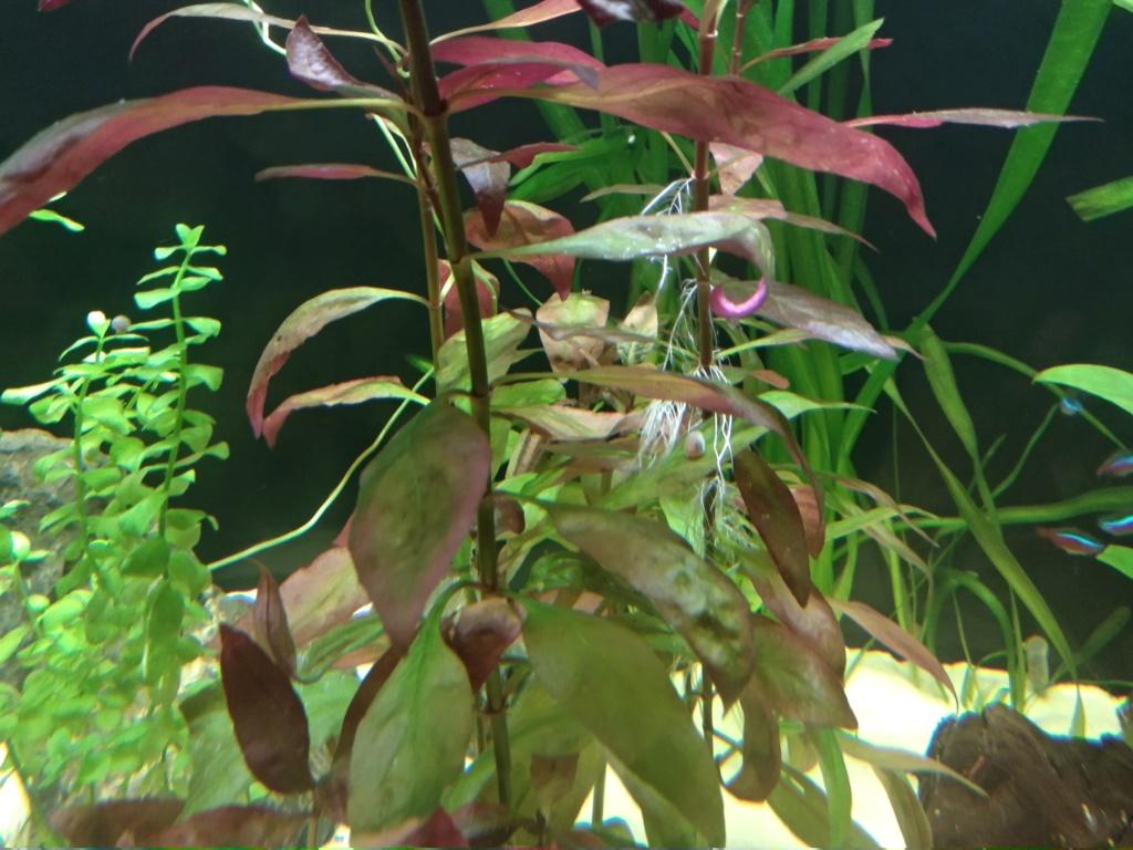 Aquarium 360l type amazonien (renouvellement de la population) Img_2024