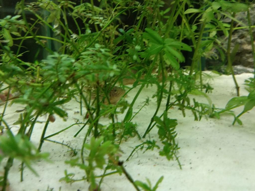 Aquarium 360l type amazonien Img_2025