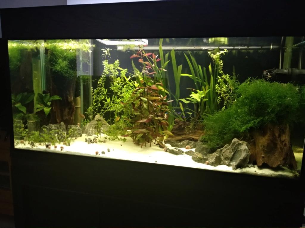 Aquarium 360l type amazonien (renouvellement de la population) Img_2037