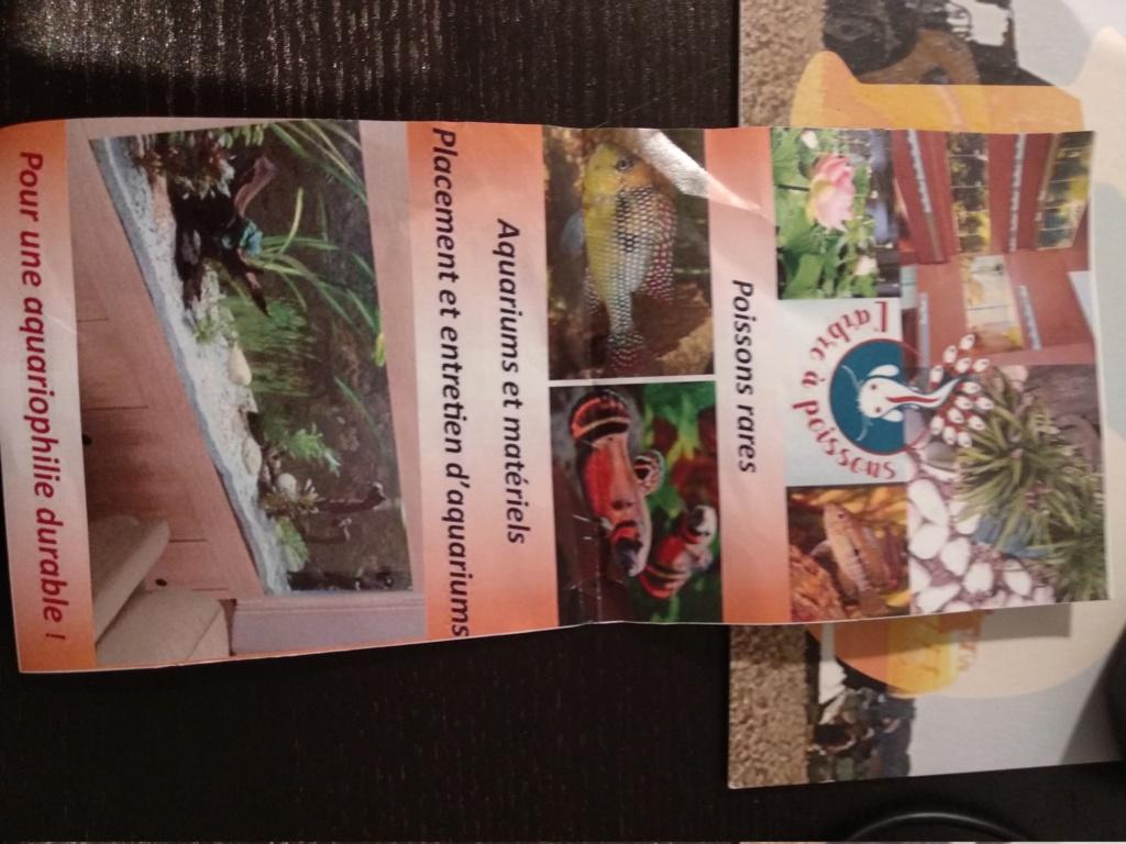 Aquarium 360l type amazonien (renouvellement de la population) - Page 3 Img_2047