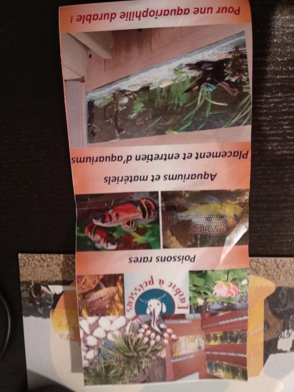 Aquarium 360l type amazonien (renouvellement de la population) - Page 3 Img_2049