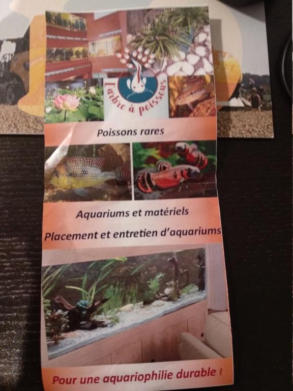 Aquarium 360l type amazonien (renouvellement de la population) - Page 3 Img_2051