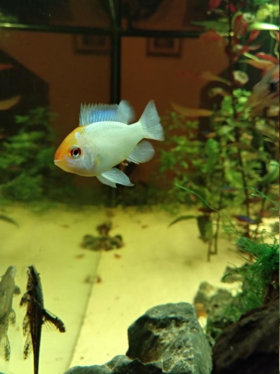 Recueil de photo aquariophiles de qualités Img_2057