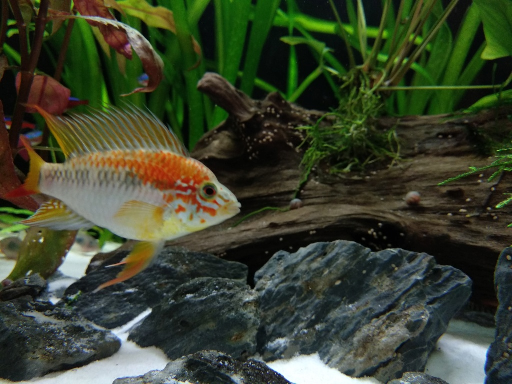 Recueil de photo aquariophiles de qualités Img_2061